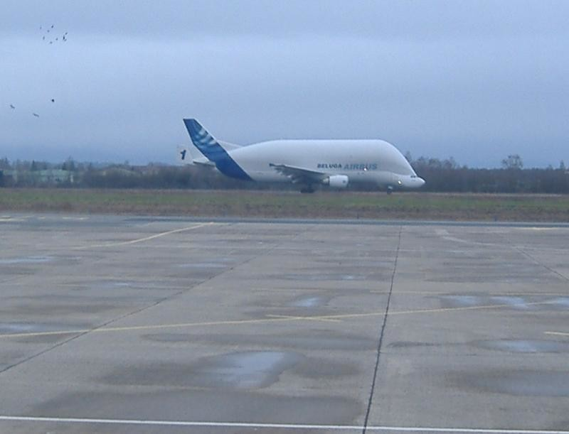 New Airbus shaped like a Beluga Whale!