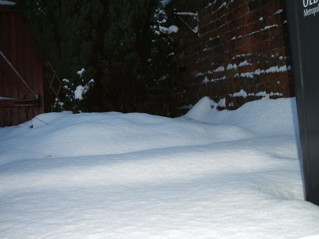 snow in yard1.JPG