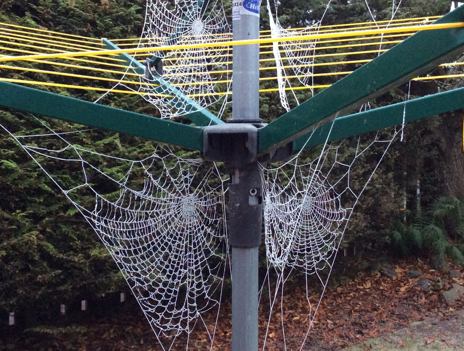 Frosty cobwebs cling to my rotary clothes line