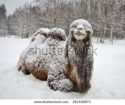 stock-photo-bactrian-camel-lies-in-snow-261530873.jpg